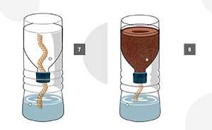 Cara Menanam Hidroponik dengan Botol Mineral Bekas